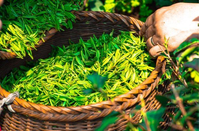 2017-12-15 10_19_36-แอล ธีอะนีน จากชาเขียว แก้เครียดได้